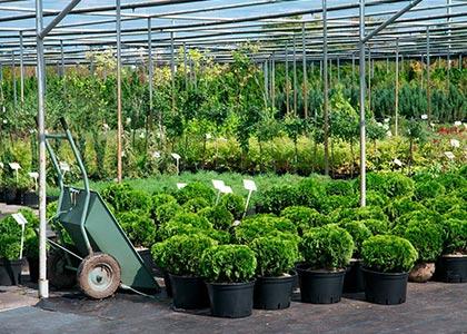 Гарди питомник декоративных растений и цветов